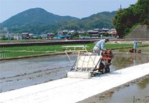 田植機利用によるマルチ布敷設